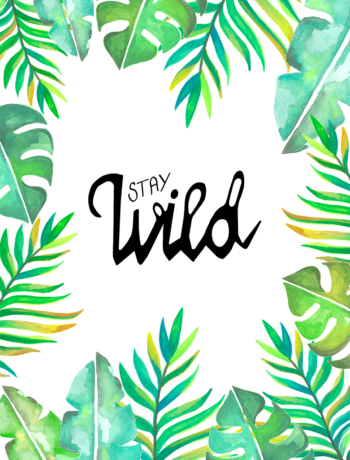 Neu Stay wild jungel instag